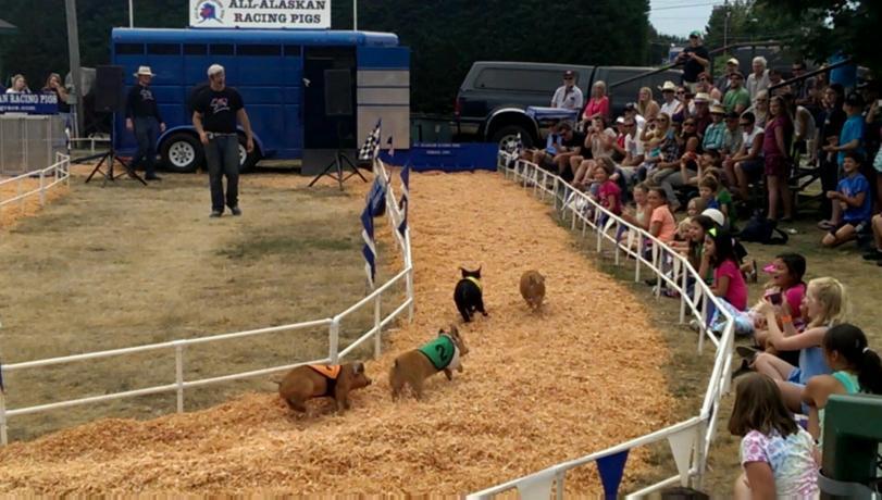 Little piggies racing towards the finish line.