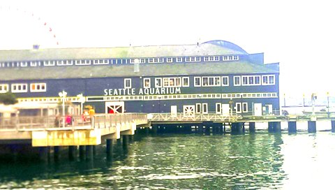 Seattle Aquarium 1
