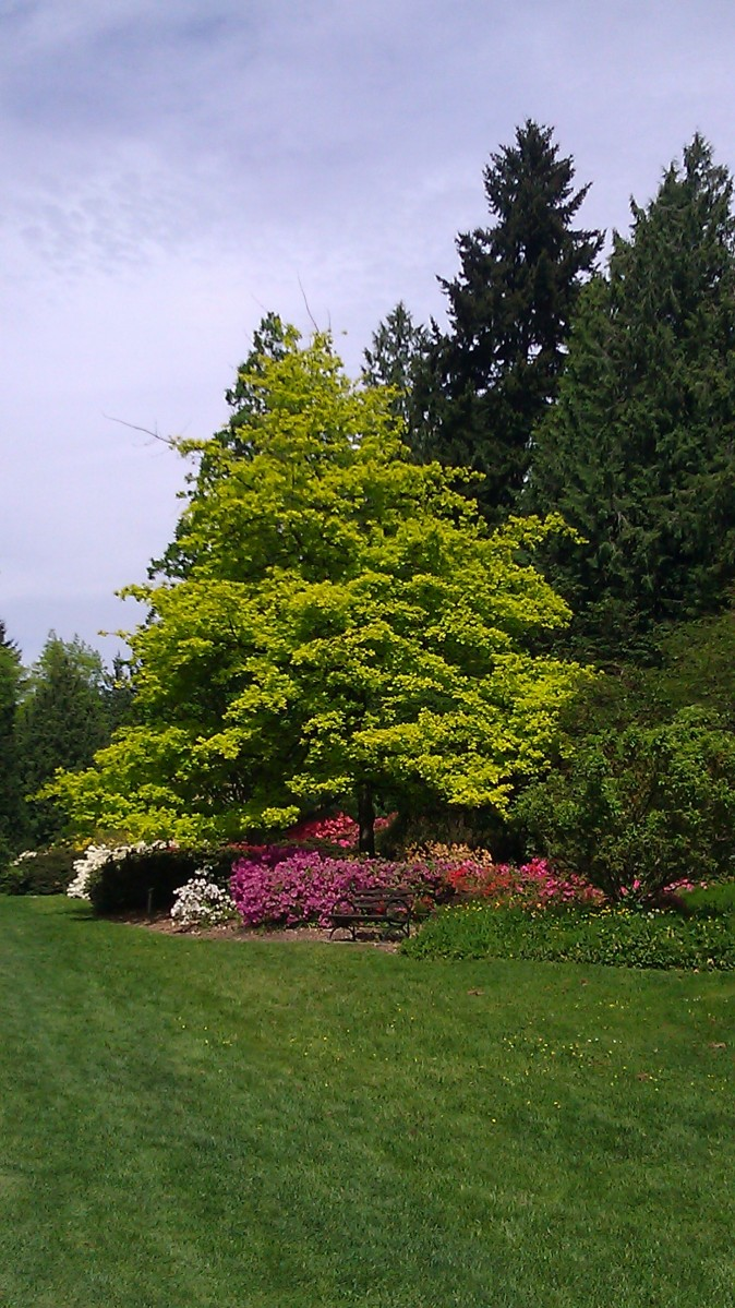 Washington Park Arboretum By Land and By Sea